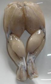ancas de rana, alimento preteneciente a la categoría de los pescados y derivados no clasificados