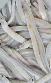 angulas, alimento rico en fósforo y vitamina D