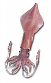 calamar, alimento rico en vitamina E y proteínas