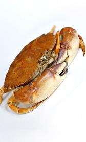 cangrejo, alimento rico en magnesio y sodio
