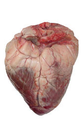 corazón de vaca, alimento rico en vitamina B6 y vitamina B12