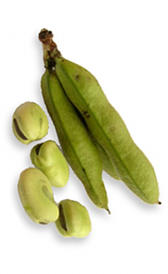 habas frescas, alimento rico en vitamina B1 y vitamina K