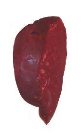 hígado de vaca, alimento rico en vitamina D y hierro