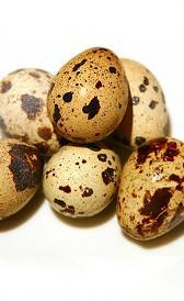huevos de codorniz, alimento rico en zinc y fósforo