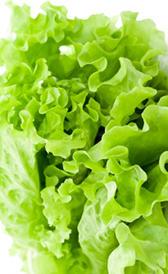 lechuga, alimento rico en vitamina K