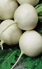 nabo, alimento preteneciente a la categoría de los tubérculos y raíces