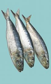 sardina, alimento rico en vitamina B5 y yodo
